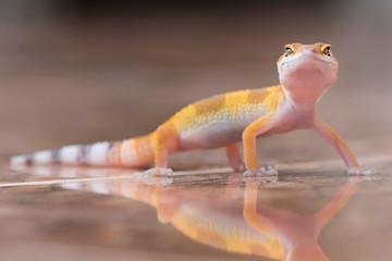 The Little Gecko Wall mural