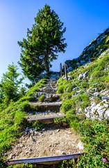 Wall Mural - path at the european alps