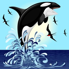 Spoed Fotobehang Draw Orca Killer Whale jumping out of Ocean Vector illustration