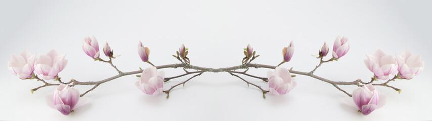 In de dag Magnolia wunderschöner blühender Magnolienzweig Panorama Banner lang