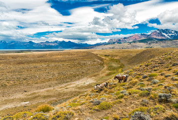 Wild Horses in Patagonian plains under the mountains