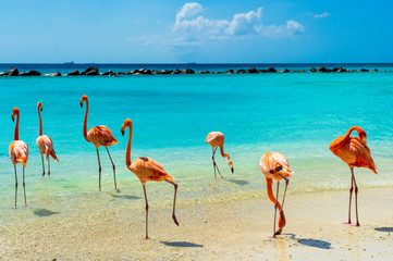 Foto auf Gartenposter Flamingo Pink flamingo on the beach from Aruba