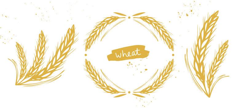 Wheat, barley, rye ears set