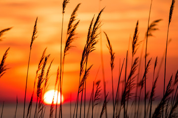 beautiful chesapeake bay colorful sunrise landscape in southern maryland calvert county usa Fotomurales