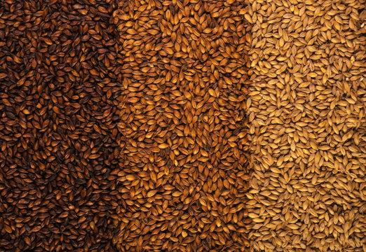 3 types of barley malt for beer.