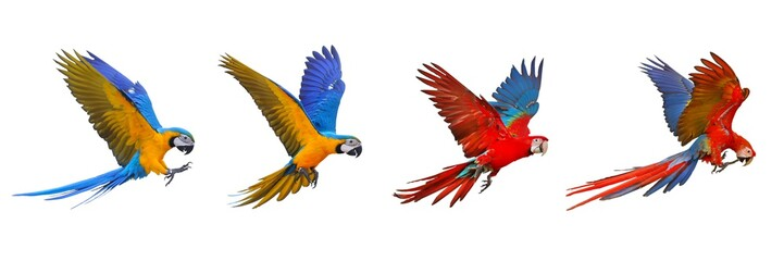 Colorful set of macaw parrot isolated on white background.