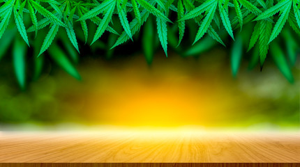 Marijuana leaf and hemp oil pictures dark background, beautiful background