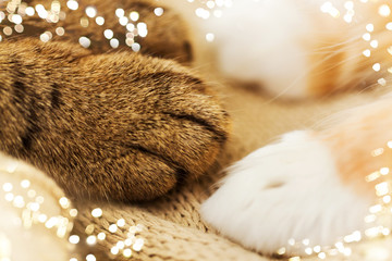 Fototapete - pets and hygge concept - close up of paws of two cats on blanket