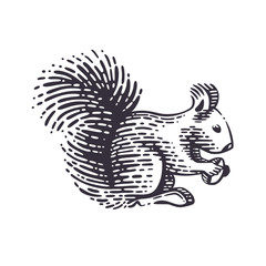 Vector illustration of the squirrel.