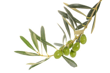 Deurstickers Olijfboom Olive tree branch with leaves and some green olives, isolated on white background, close-up