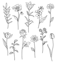 Hand drawn flowers. Set of sketches of different summer flowers. Rose, tulip, dahlia, lily, chamomile and leaves line art. Vector illustration