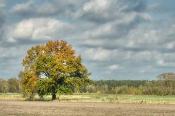słoneczny jesienny dzień, krajobraz pól i lasów wczesną jesienią, niebo lekko zachmurzone