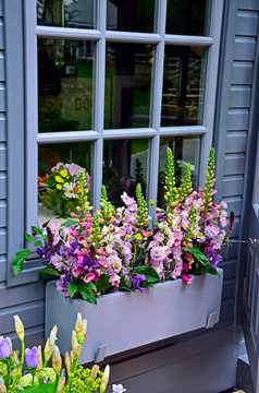 Window box planted with selection of colourful flowers including scabiosa, foxgloves and phlox