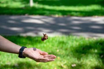 acorn held in the palm. picture taken in Central Park Anton von Scudier from Timisoara