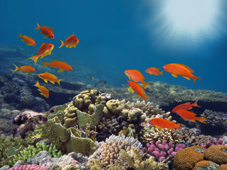 Fototapete - Tropical fish and Hard corals in the Red Sea