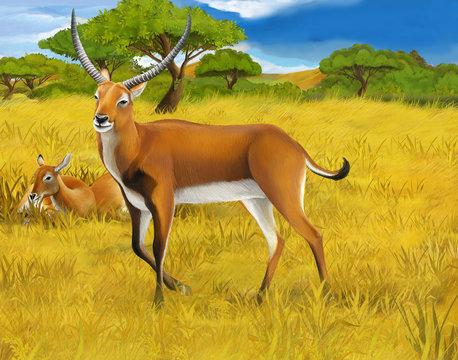 cartoon scene with koba lychee on the meadow safari illustration for children