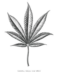 Cannabis Indica leaf hand draw vintage engraving style black and white clip art isolated on white background,Cannabis Indica leaf botanical for education