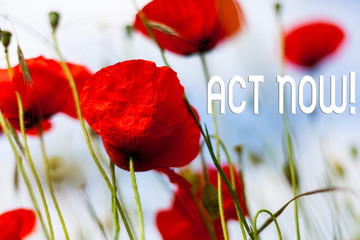 Writing note showing Act Now. Business concept for do not hesitate and start working or doing stuff right away Front view summer red color poppy flowers sky background