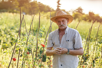 Portrait of senior  farmer.He standing in his organic garden and holds pumpkin.