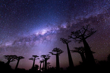 Photo sur Plexiglas Baobab Milky Way at Avenue of the Baobabs
