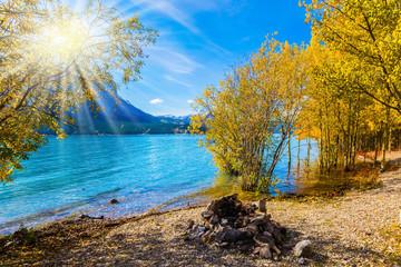 The golden foliage of aspen
