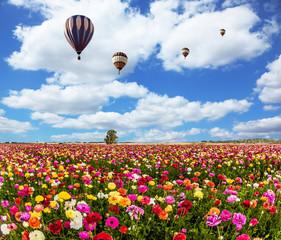 Th fields of flowering garden buttercups