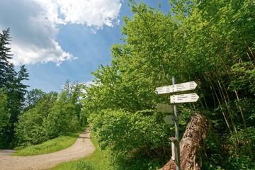 Baden-Württemberg - Münstertal/Schwarzwald - Wanderweg