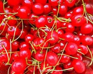 Fresh cherry background