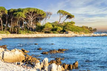 Ile paradisiaque à Cannes Côte d'Azur Provence France - île Sainte Marguerite archipel des îles de Lerins au lever du soleil avec ses pins parasol centenaires