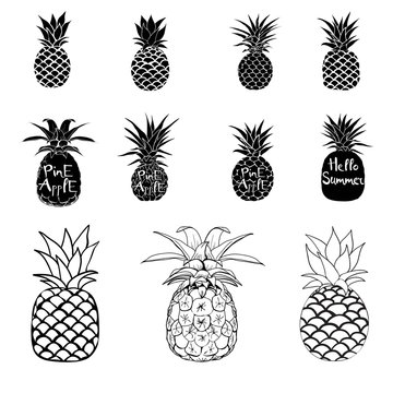 Pineapple vector black and white three different outlines. Vector Illustration.