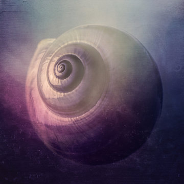 snail shell with texture