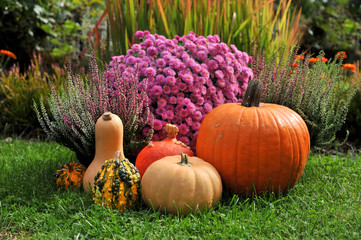 Pumpkins in fall garden, with autumn flowers. Decoration.