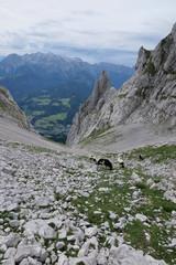 Fototapete - schafe im hochgebirge