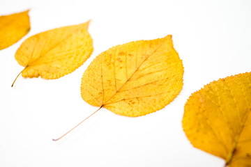 Spoed Foto op Canvas Olijf autumn leaves isolated on white background