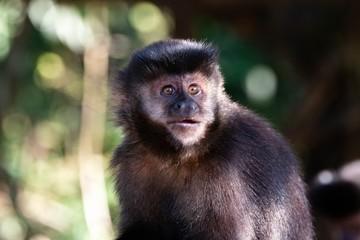 Expressão assustada de um macaco