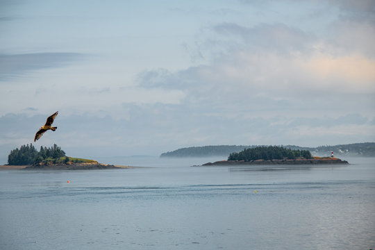 Pastel Fog over Passamaquoddy Bay