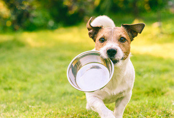 Fotobehang Hond Hungry or thirsty dog fetches metal bowl to get feed or water
