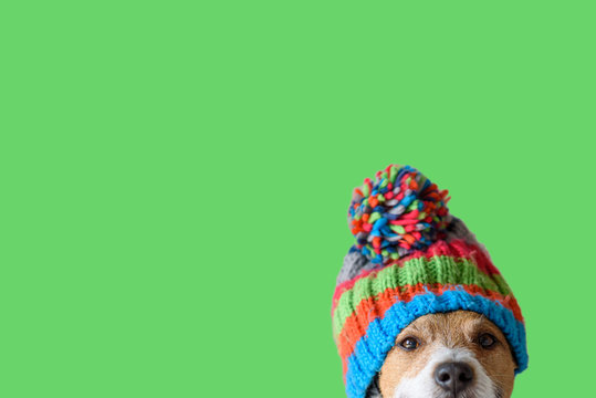Concept of pet ready for cold winter weather with dog wearing warm knitted hat