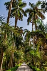 Botanical island (Lord Kitchener's island) on Nile river, Egypt