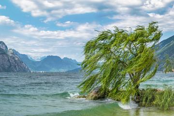 Lone Willow tree Fototapete