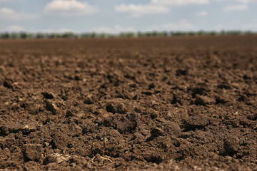 View of fertile ground surface on sunny day