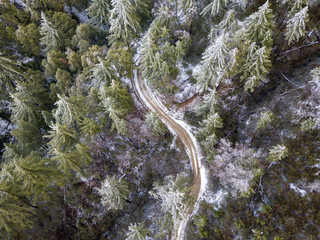 Aerial view of Snow dusted pine forest in mountains in winter