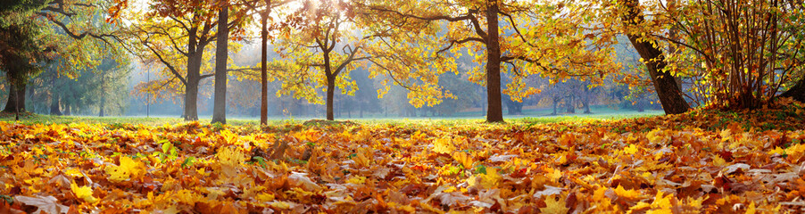 Wall Mural - trees in the park in autumn on sunny day