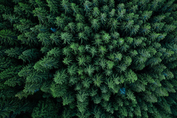 Forest from above Wall mural