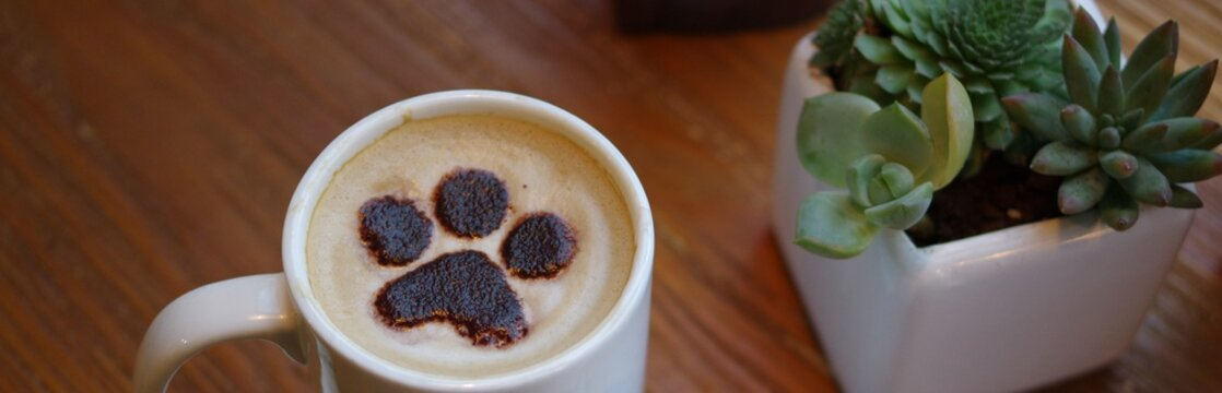 Cat paw pattern latte art coffee in white mug on wood table with succulent plant decoration in cafe