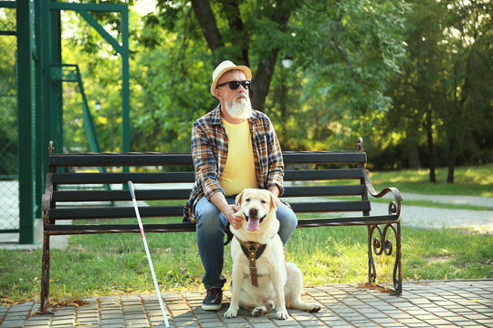 Blind mature man with guide dog sitting on bench in park