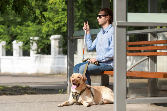 Blind young man with guide dog waiting for bus outdoors