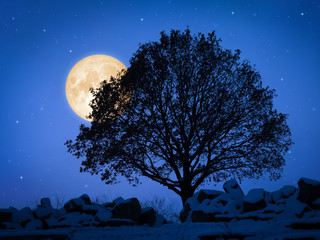 a tree at night with pale moon