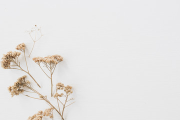 Foto op Aluminium Bloemen Dry floral branch on white background. Flat lay, top view minimal neutral flower background.