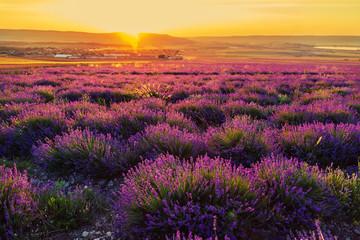 Lavender field at sunset. Great summer landscape.